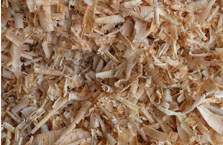 Shavings Close-up